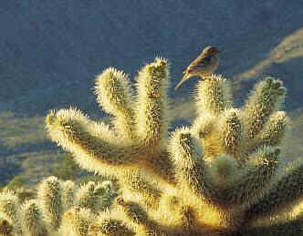 Morning sun on cactus with perching bird in beautiful Arizona.
